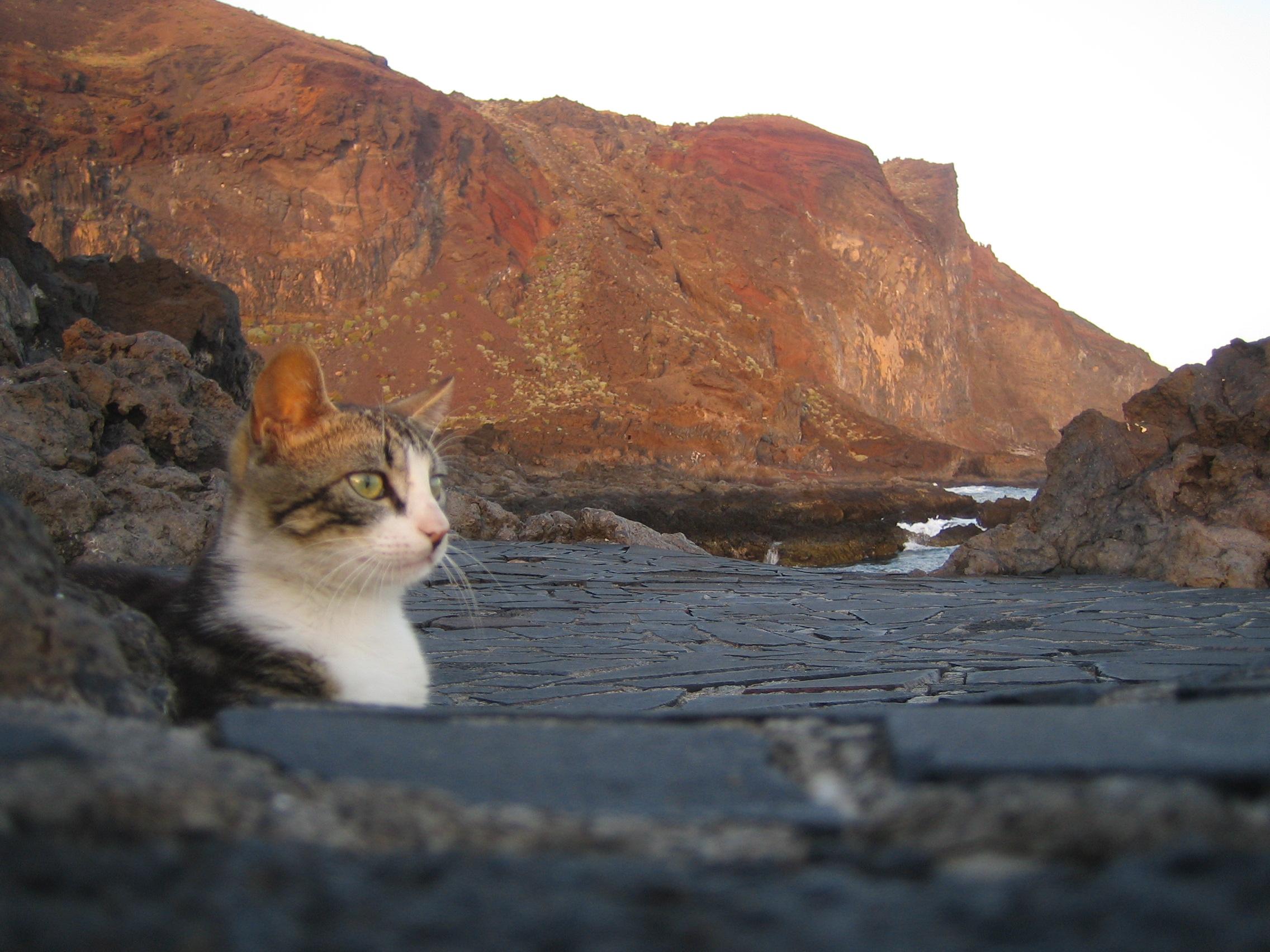 Foto playa Tacorón. Tacorón con gato