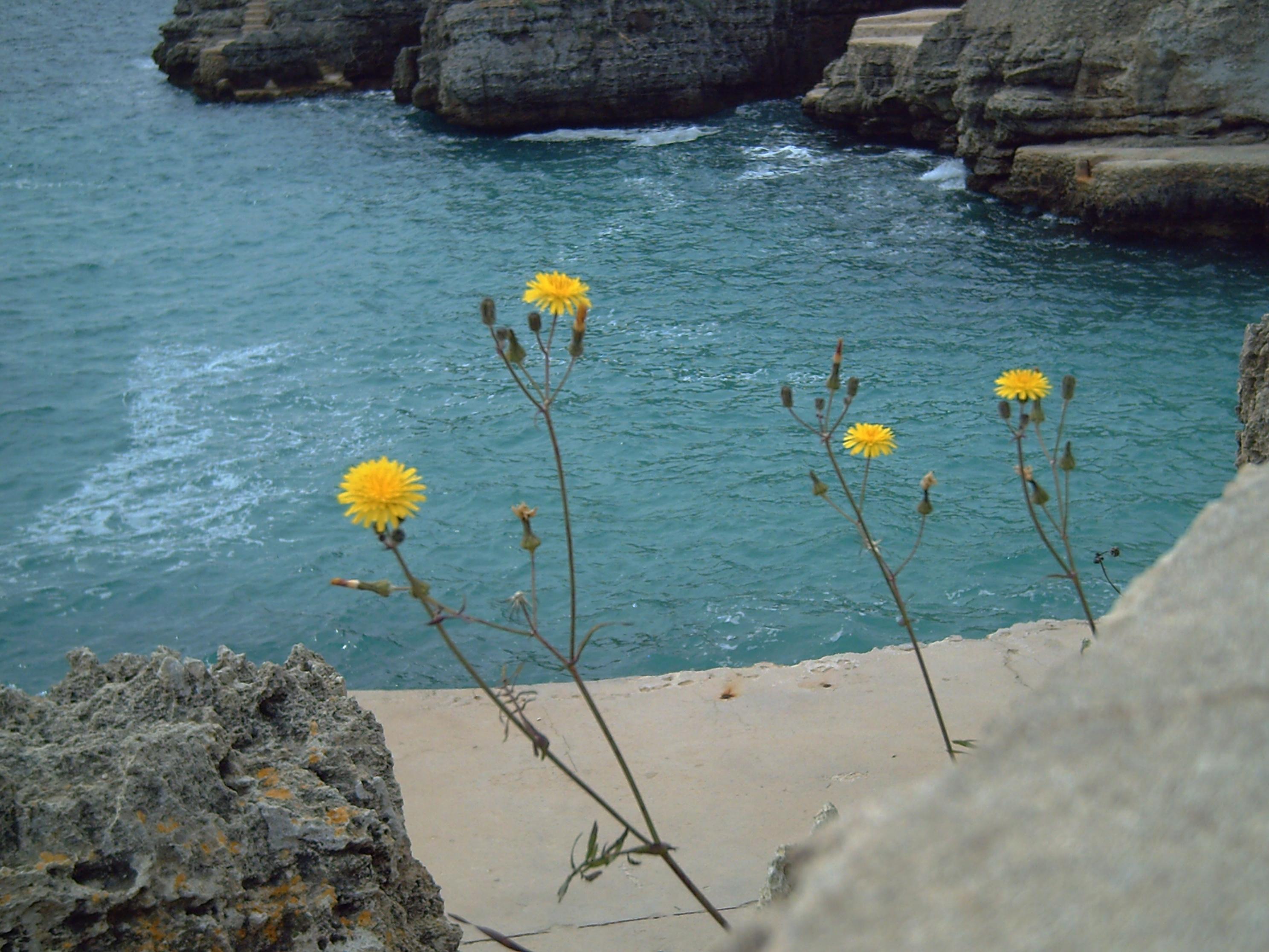 Playa Cala En Forcat