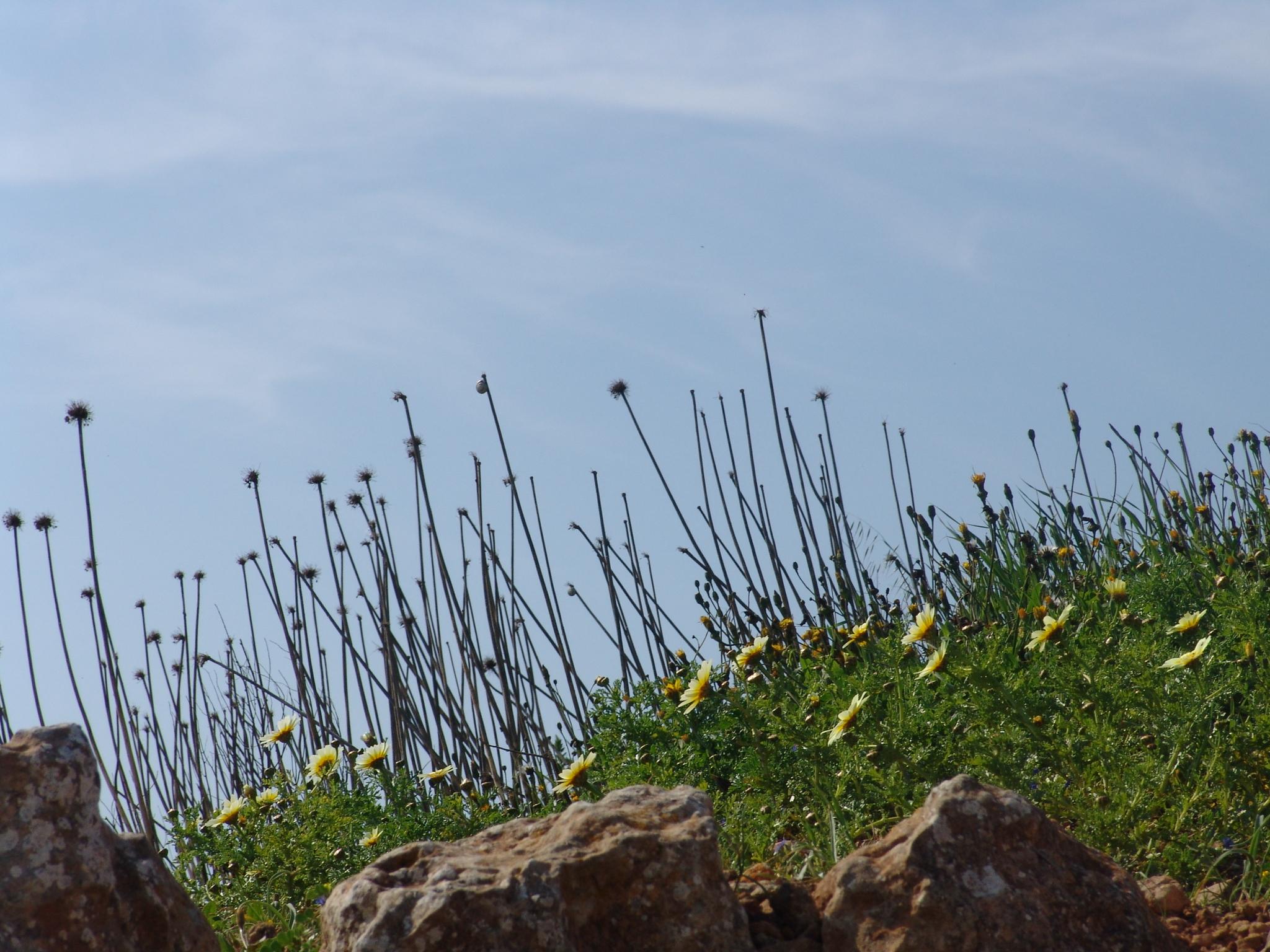 Foto playa Sant Tomas. binigaus primavera, cami de cavalls