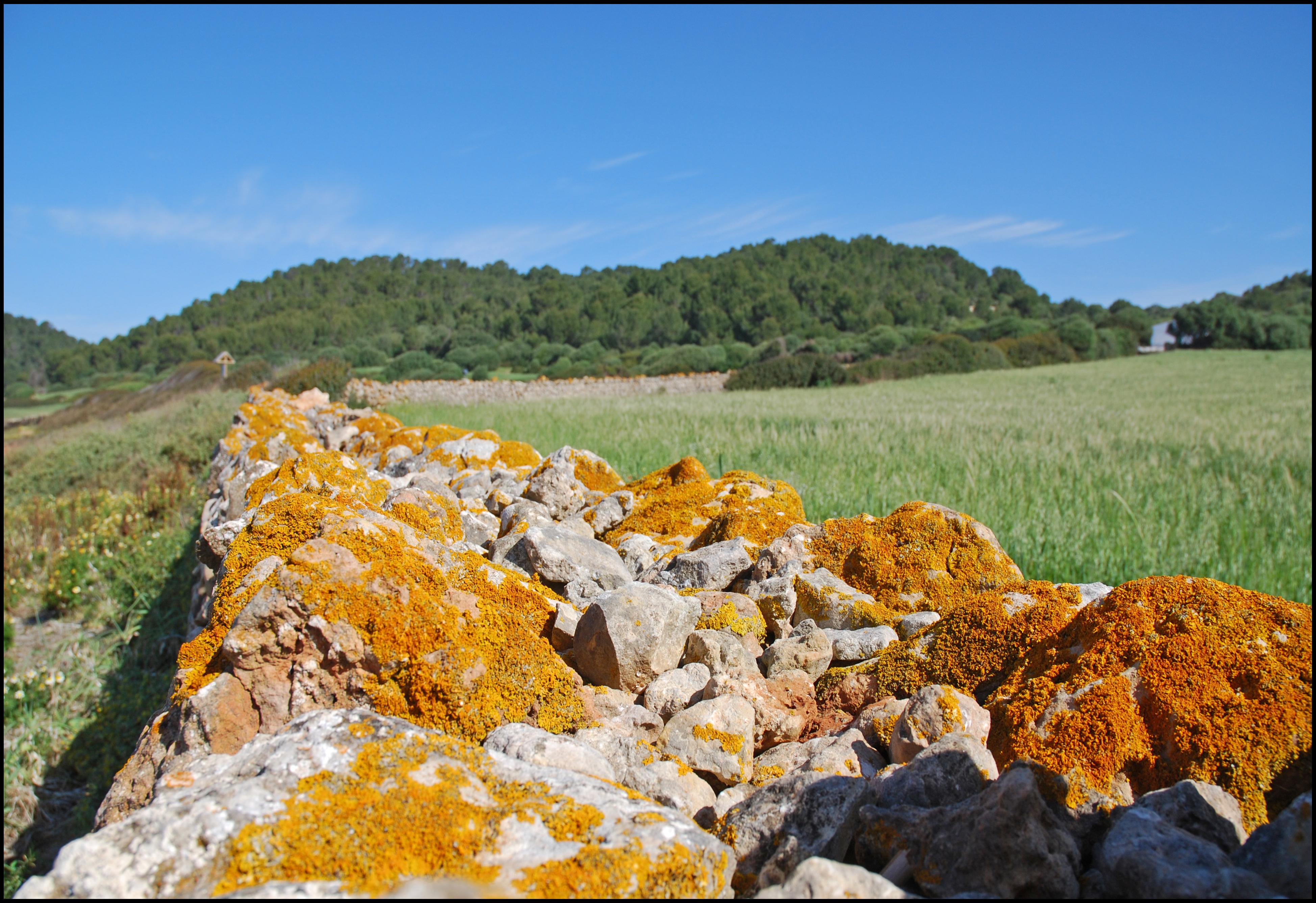 Foto playa Sant Tomas. Pared Seca, detalle