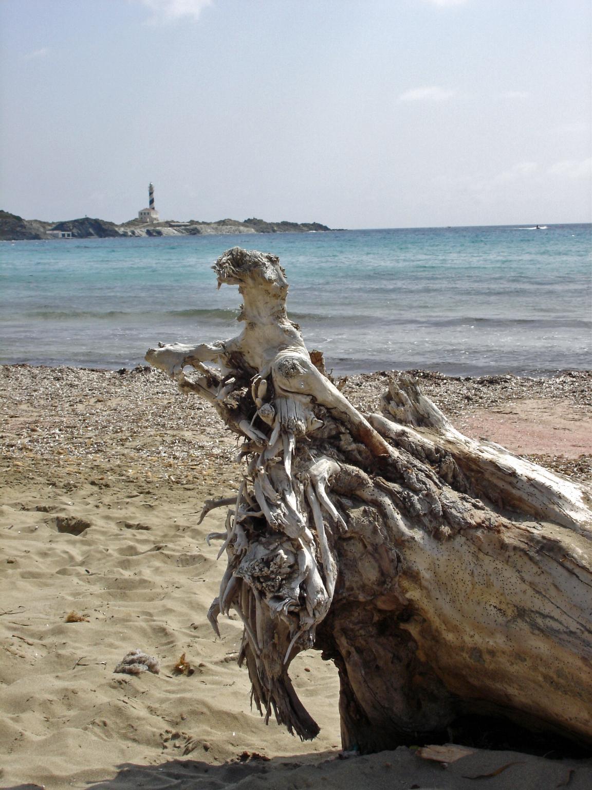 Foto playa Capifort. naturaleza seca